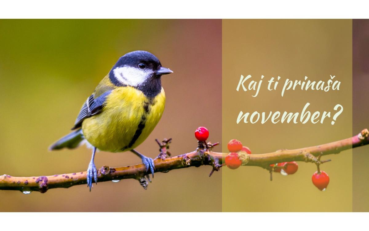 Kaj ti prinaša november