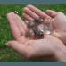 Izbrani kristal