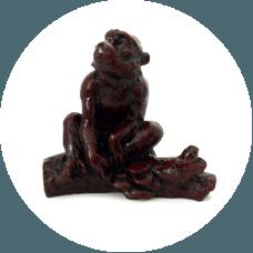 Živalski vodnik - opica