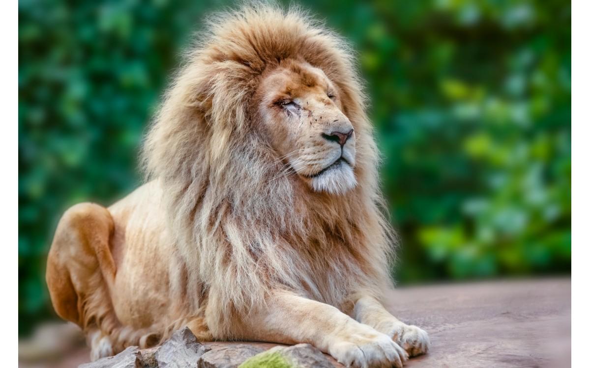 Vse, kar moraš vedeti o levih